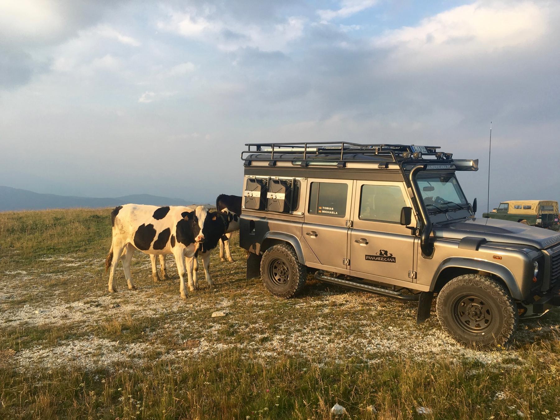 Kuh-Parkplatz auf dem Monte Lisser in den Alpen